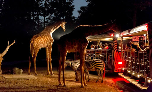 Chiang Mai Night Safari, Thailand