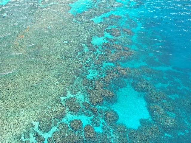 Great Barrier Reef in Cairns are in danger