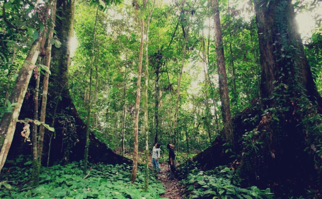 Be one with nature at Pulau Tiga, otherwise known as Survivor Island