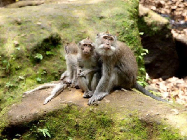 The Ubud Monkey Forest is a must-visit for nature lovers