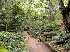 The Ubud Monkey Forest is home to Hindu temples and monkeys