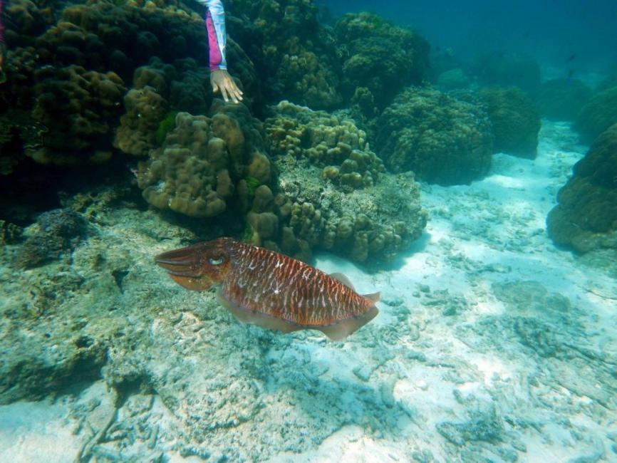 SNORKELLING: Maiton Island, Phuket