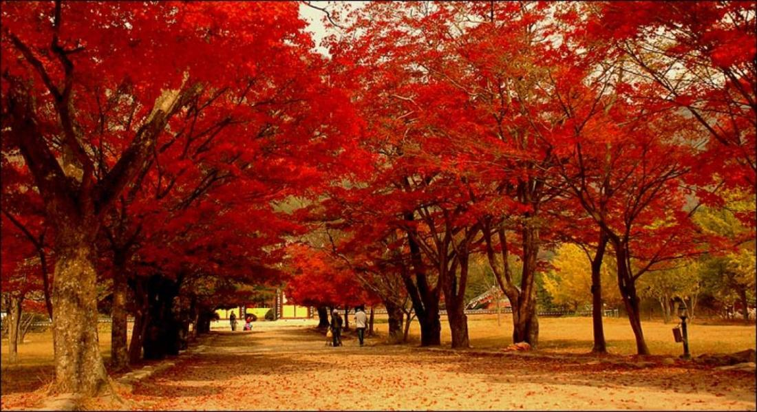 Naejangsan National Park is especially vibrant in the autumn.