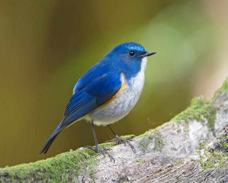 Doi Inthanon Bird Watching