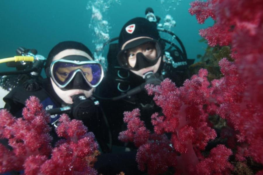 Jeju Island: Scuba Diving