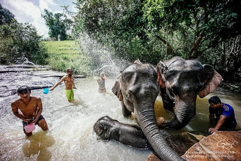 Karen Village Elephant Sanctuary_2