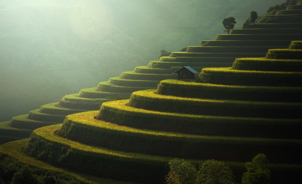 Rice fields Mu Cang Chai, Vietnam